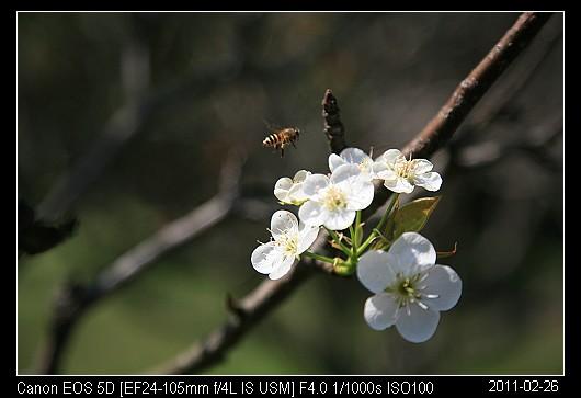 20110226F2.jpg
