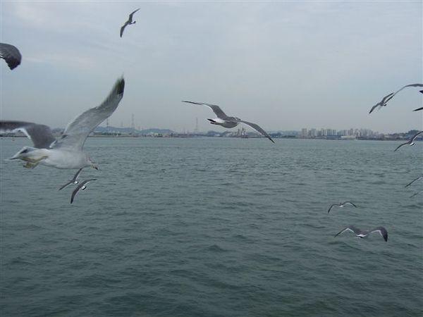 技術超群的海鷗,從不漏接蝦味先