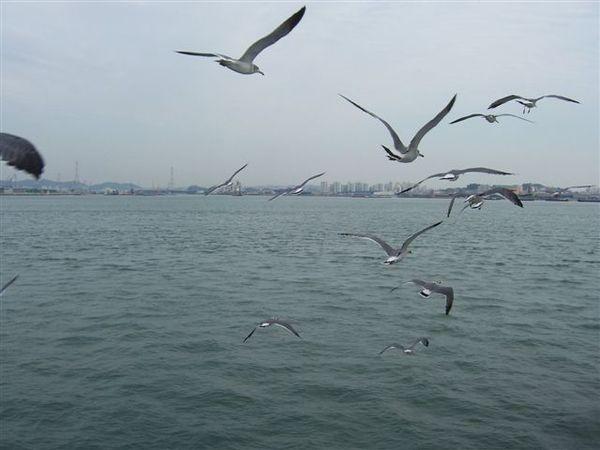 海鷗飛的很近