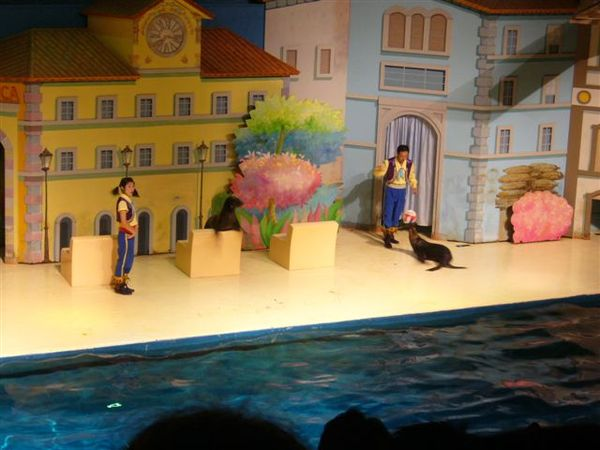 海狗的表演秀