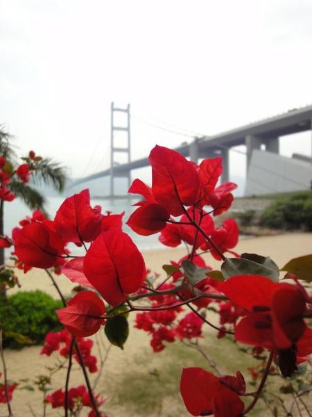 馬灣青衣大橋