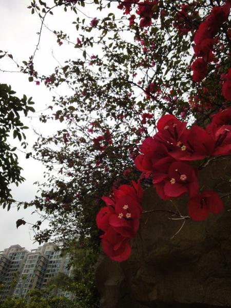 很美的紅花