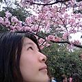 新竹公園 櫻花 1.jpg