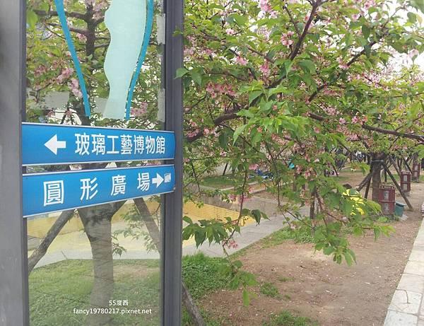 新竹公園 櫻花 5.jpg