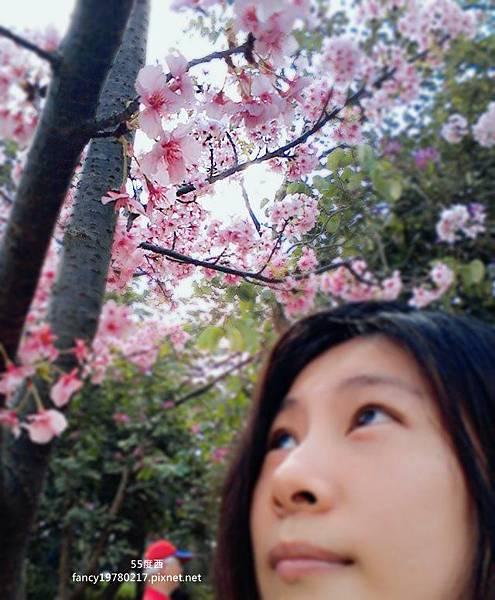 新竹公園 櫻花7.jpg