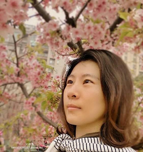 新竹公園 櫻花9.jpg