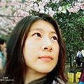 新竹公園 櫻花 2.jpg