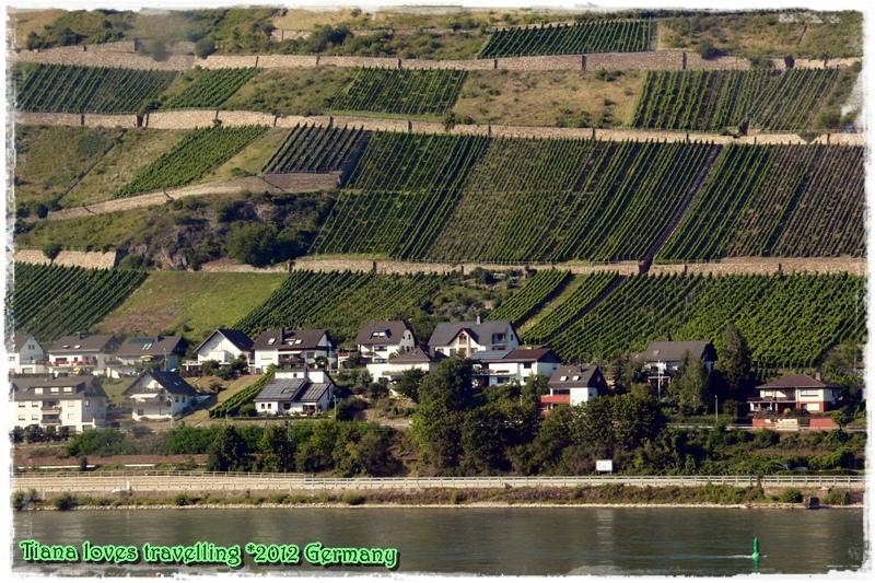 萊茵河 Rhein (4)