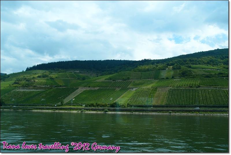Rhein萊茵河 (3)