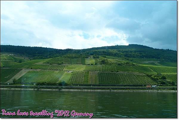 Rhein萊茵河 (4)