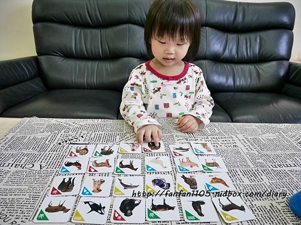 【RUNALAND】聲音點點名(動物版)-美好桌上時光 親子桌遊 (11).JPG