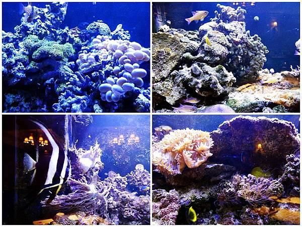 【新北美食】慕拉諾義式餐廳 Murano #高CP值 #約會餐廳 #生態魚缸#新莊美食 #平價義式餐廳 #義式料理 (2).jpg