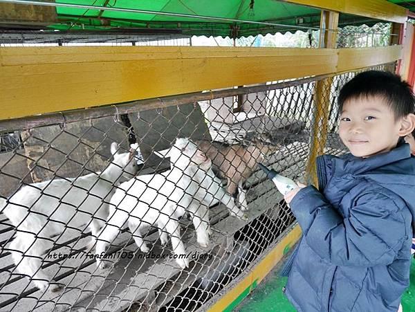 【宜蘭景點】可達羊場 #餵小動物 #羊奶冰淇淋DIY #羊奶下午茶 #宜蘭員山 #宜蘭親子景點 (6).JPG