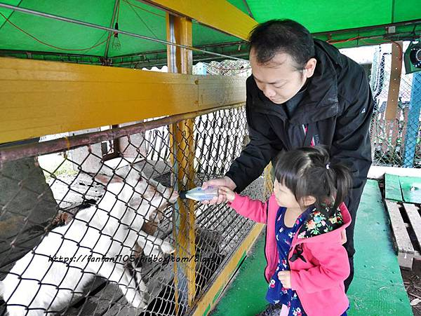 【宜蘭景點】可達羊場 #餵小動物 #羊奶冰淇淋DIY #羊奶下午茶 #宜蘭員山 #宜蘭親子景點 (7).JPG