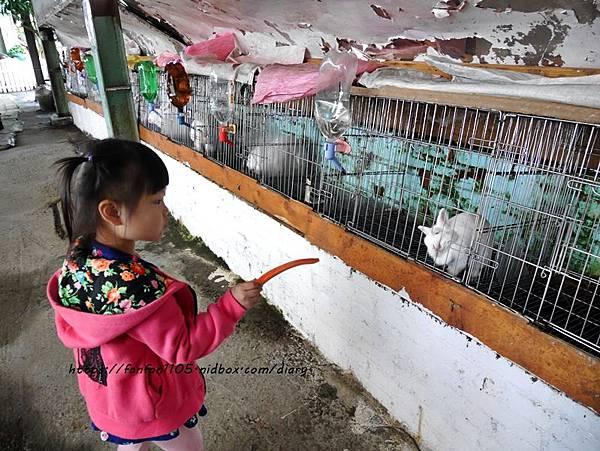 【宜蘭景點】可達羊場 #餵小動物 #羊奶冰淇淋DIY #羊奶下午茶 #宜蘭員山 #宜蘭親子景點 (23).JPG