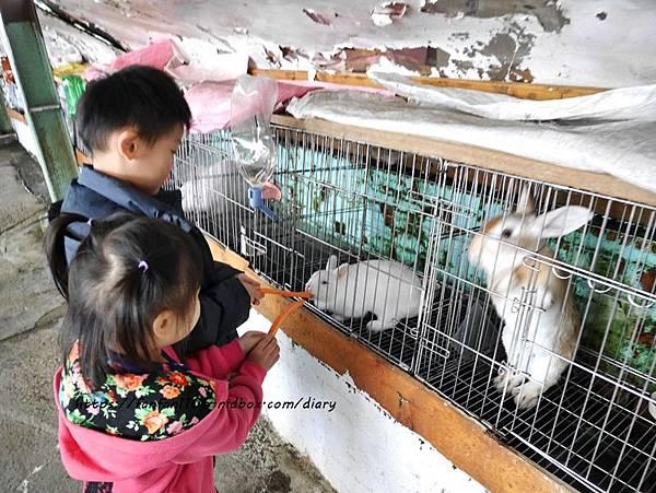 【宜蘭景點】可達羊場 #餵小動物 #羊奶冰淇淋DIY #羊奶下午茶 #宜蘭員山 #宜蘭親子景點 (24).JPG