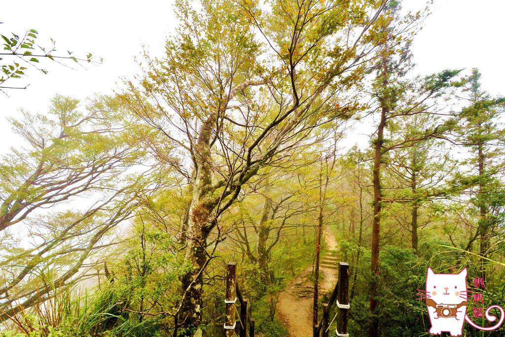 太平山:山毛櫸國家步道 漫步在夢幻的迷霧森林中