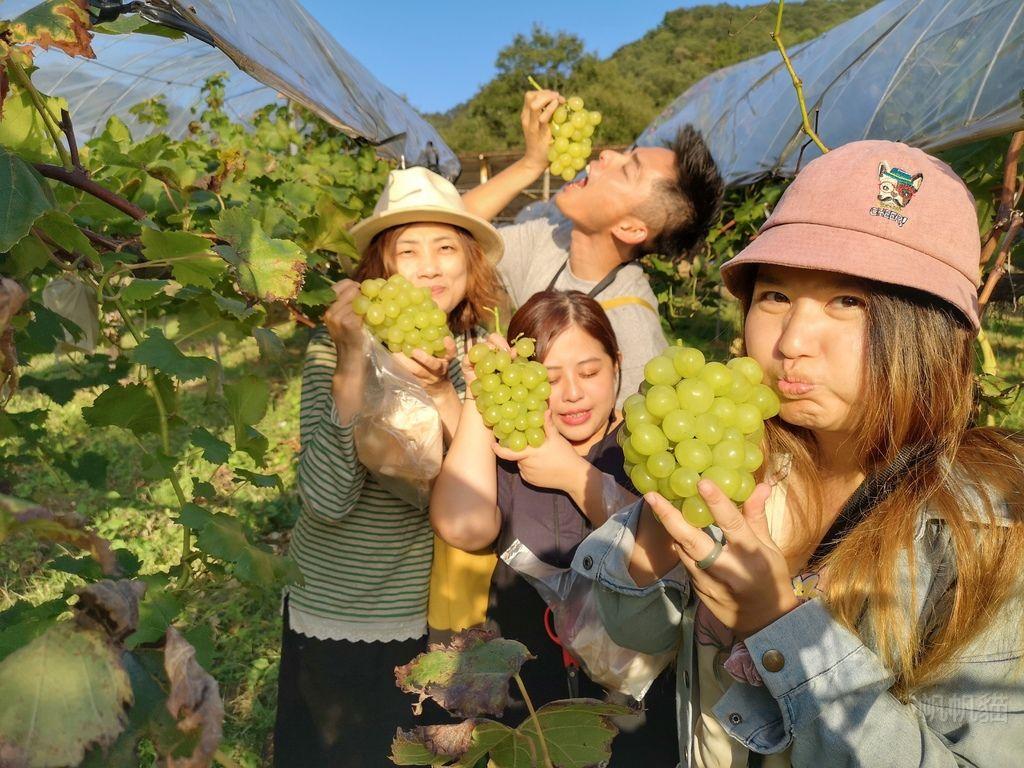 【日本 岡山】水車の里フルーツトピア  超大串葡萄現採現吃 用水梨做窯烤比薩