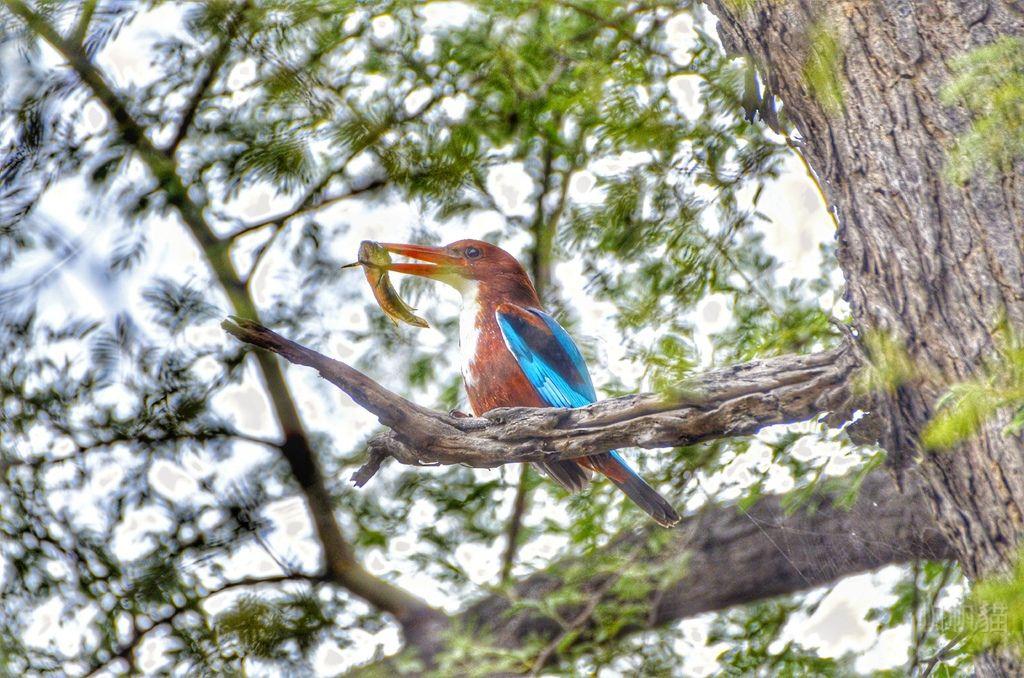 【印度 巴勒特普爾】凱奧拉德奧國家公園 上百種鳥類任你拍 根本鳥兒天堂