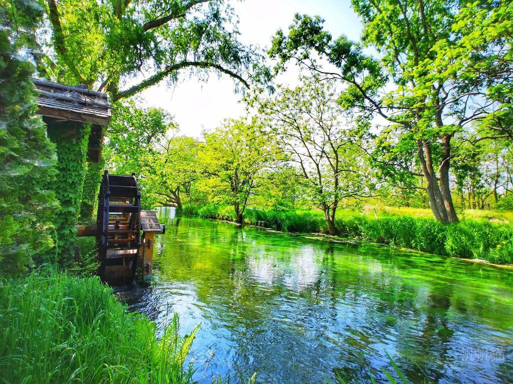 【日本 長野】大王山葵農場 日本黑澤明導演拍攝電影「夢」選用的場景
