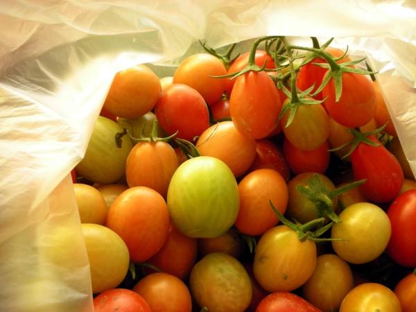 大姨家的番茄1.JPG