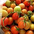 大姨家的番茄2.JPG