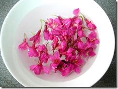 鹽醃櫻花2