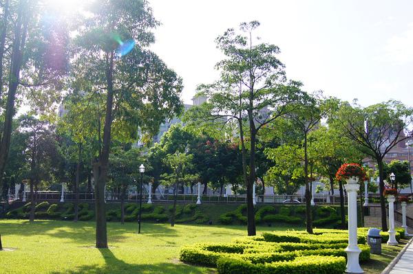 樹DSC05039.JPG