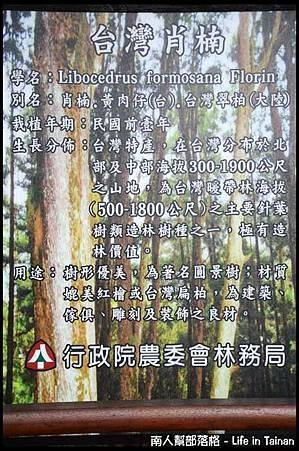 台灣肖楠母樹林04.jpg