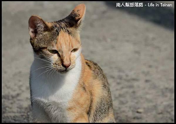 台鹼宿舍(貓)-04.jpg