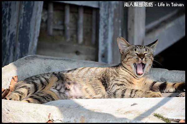 台鹼宿舍(貓)-09.jpg