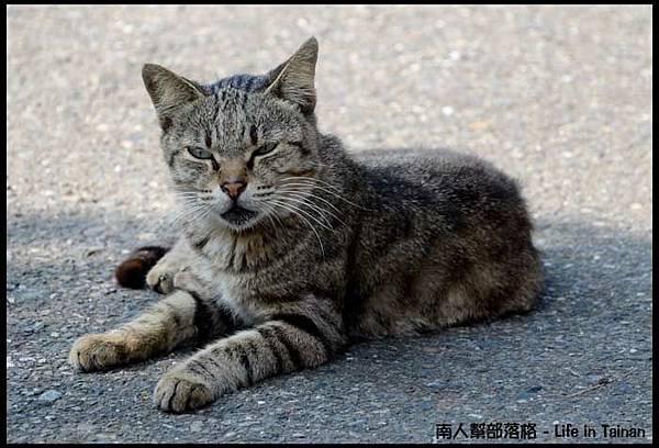 台鹼宿舍(貓)-11.jpg