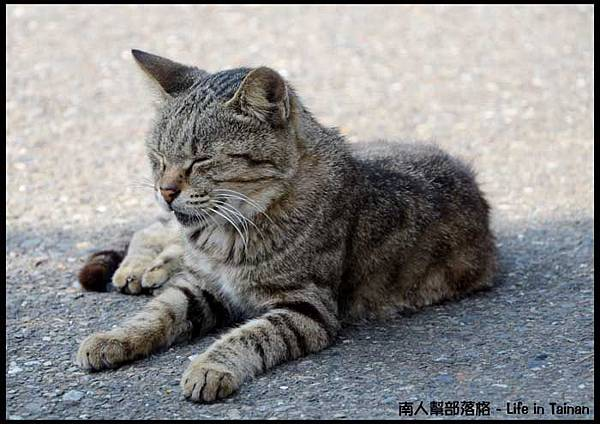 台鹼宿舍(貓)-12.jpg