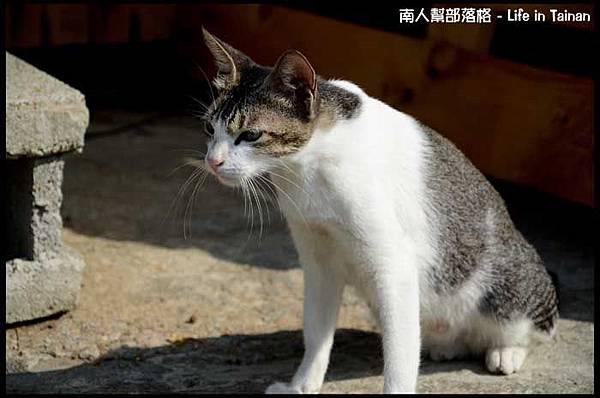 台鹼宿舍(貓)-13.jpg