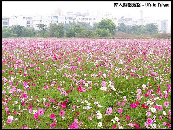 台南台糖花海-0.jpg