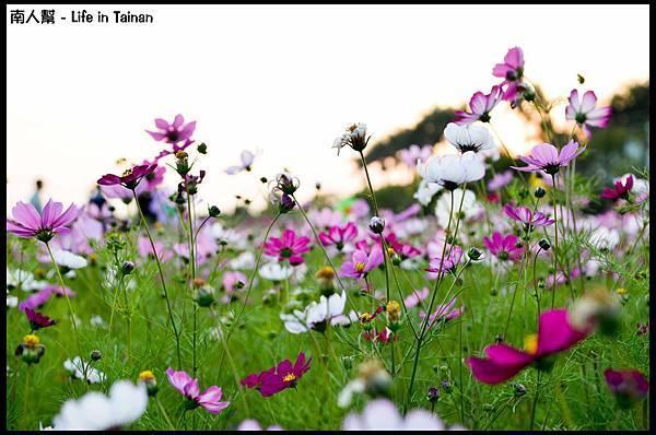 2013安定花海節-10