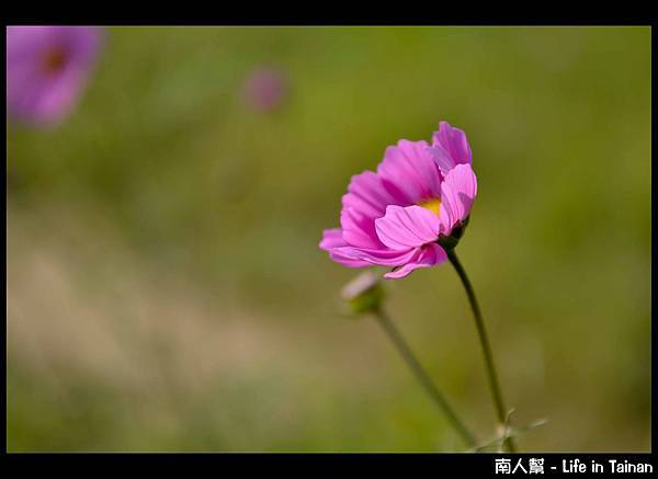 走馬瀨農場-04