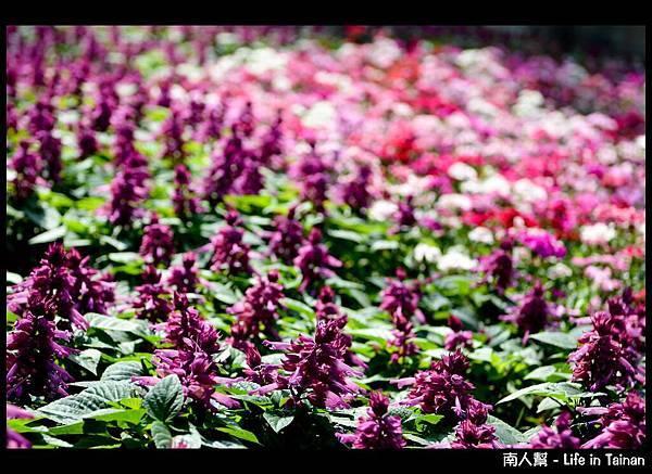 一串紫-01