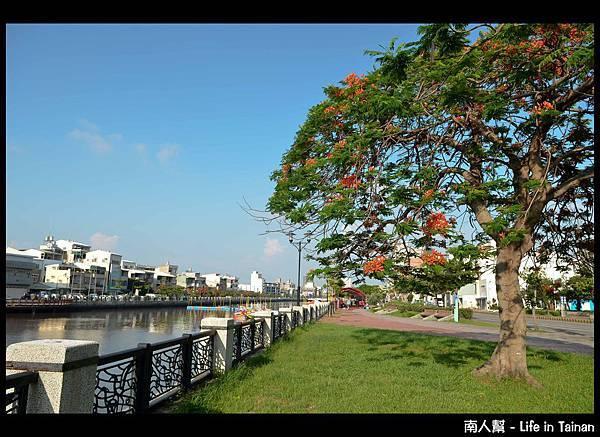 安平運河旁的鳳凰樹-10