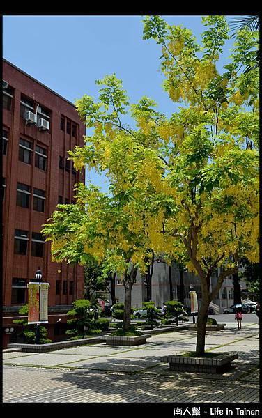 國立臺南大學 - 2013阿勃勒節11