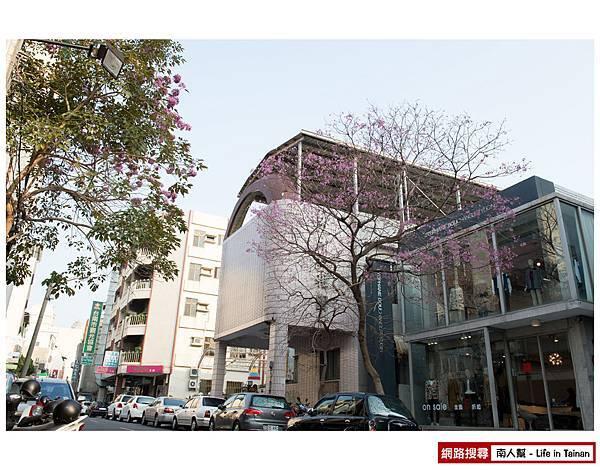 紫紅風鈴木-10.jpg