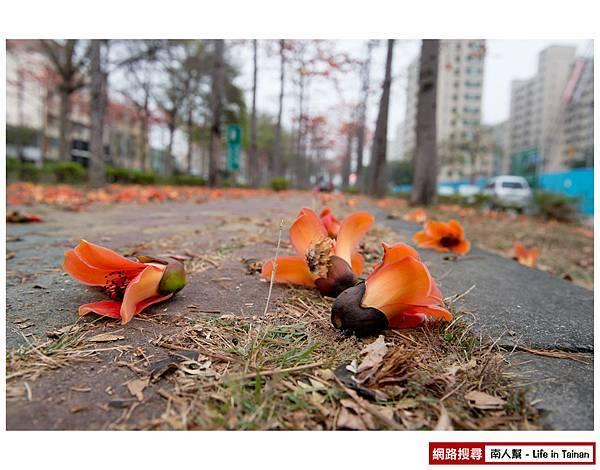 東豐路木棉花