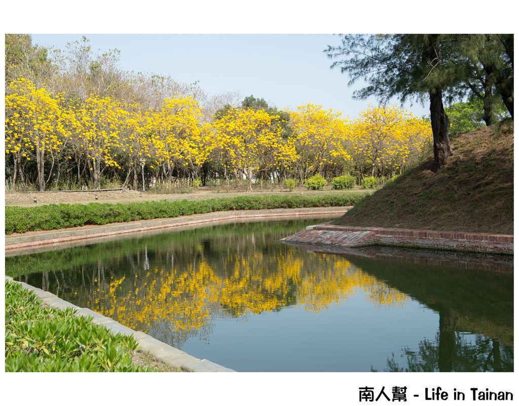 億載公園&黃風鈴木