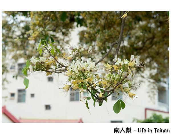 台南魚木(安南區代天府)