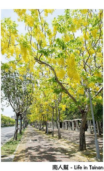 台南阿勃勒