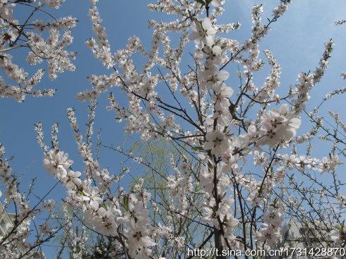 #  鸟语了,花香了,天蓝了,暖和了,我醒了。