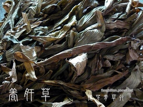養肝草09.jpg