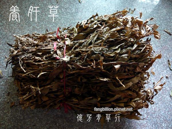 養肝草10.jpg