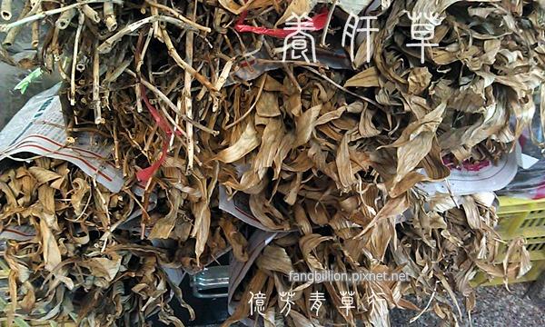 養肝草11.jpg