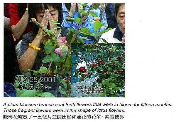Plumflower[1].jpg